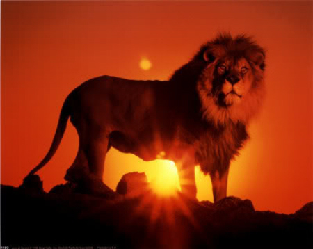 Artificial Immortality Becoming the Archetype lion picture - I AM A BEAST